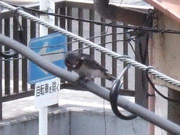 swl060614_006.jpg